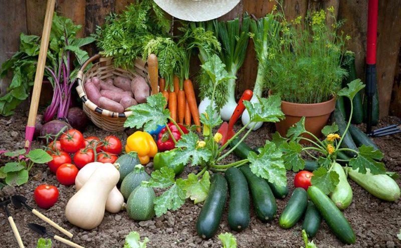 sử dụng thực phẩm theo mùa