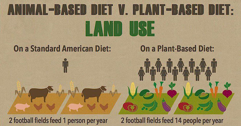 xu hướng lựa chọn thực phẩm thân thiện với môi trường